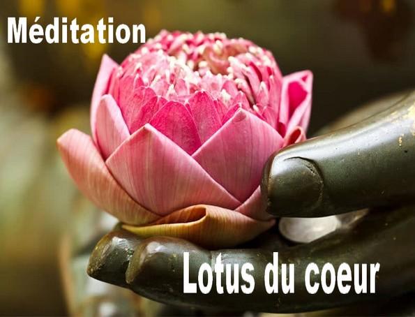 meditation lotus coeur