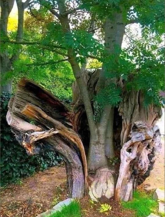 Stage les Eléments : Comme cet arbre venez renaître à vous même